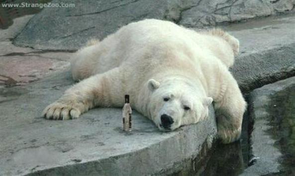 Polar Hang